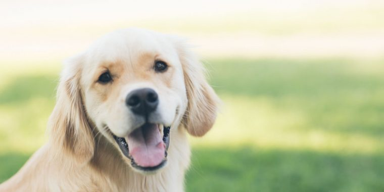 pet health insurance in Frankfort STATE | Gnade Insurance Group, Inc.